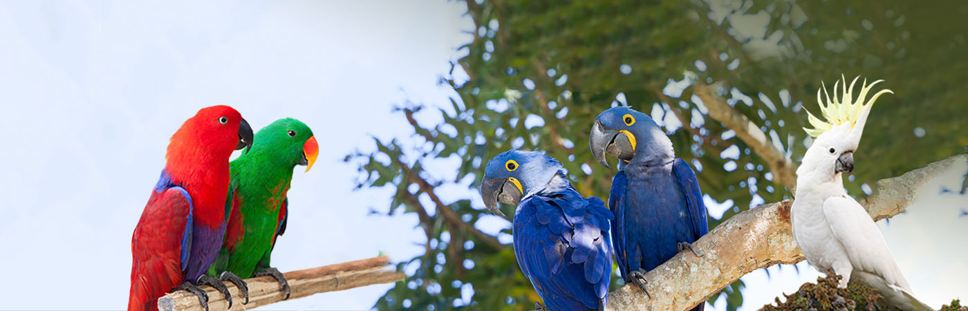 Deli Nature - Kanaries, Tropische vogels, Europese vogels, Gras- & kleine parkieten, Grote parkieten, Papegaaien