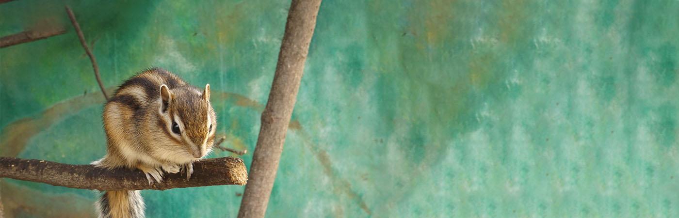 Deli Nature - Eekhoorn