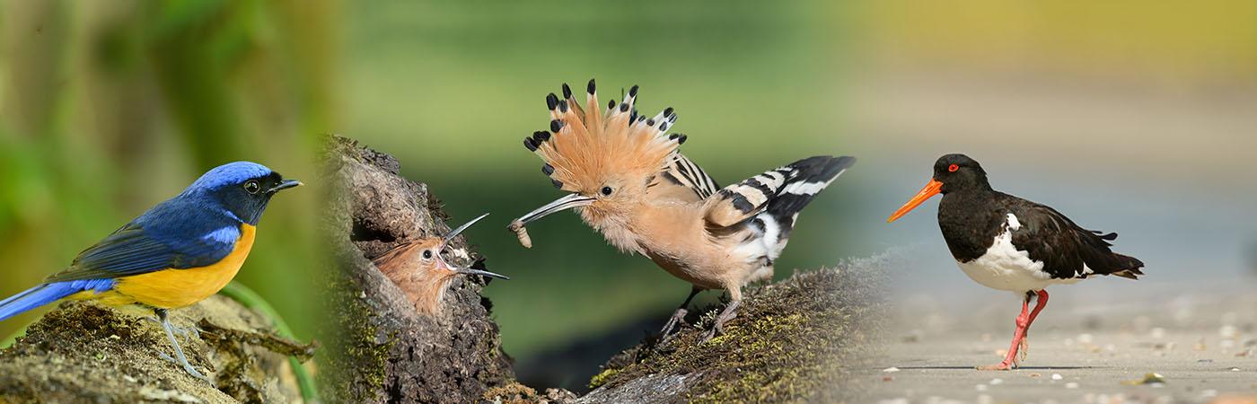 Deli Nature - Tropische vogels, Europese vogels, Gras- & kleine parkieten, Grote parkieten, Papegaaien, Insecteneters, Vruchteneters