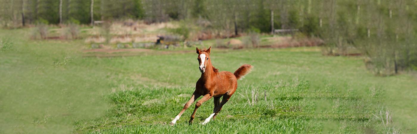 Deli Nature - Paard