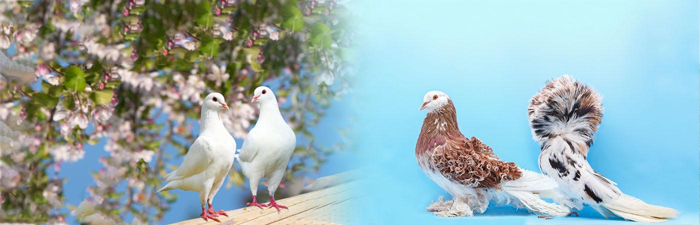 Deli Nature - Fazant, Kalkoen, Kip, Kwartel, Loopvogel, Sierduif, Sierhoender